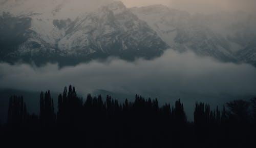 Fotos de stock gratuitas de amanecer, árbol, invierno