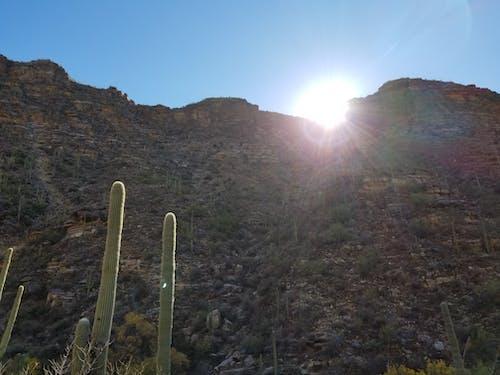 Darmowe zdjęcie z galerii z arizona, góry, kaktus, pustynia