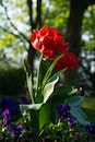 red, plant, spring