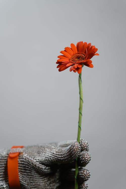 Photos gratuites de dynamique, fleur, gants