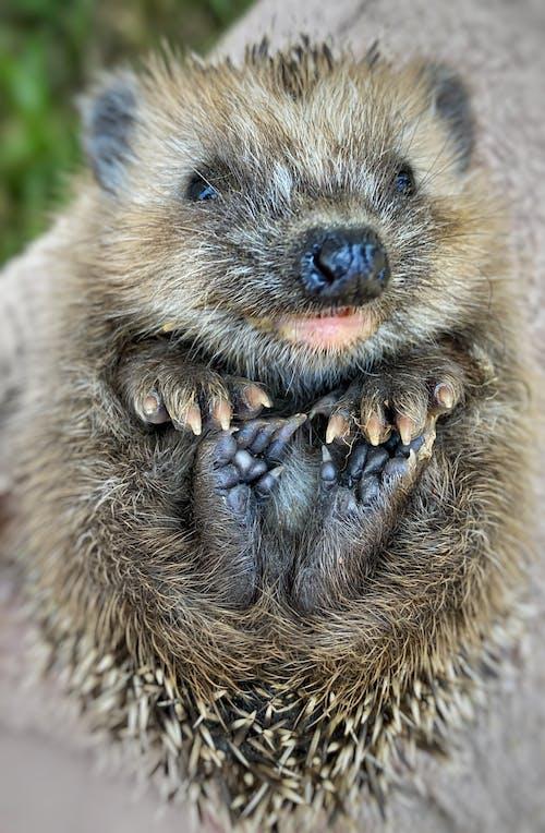 Free stock photo of animal, cutie, nature