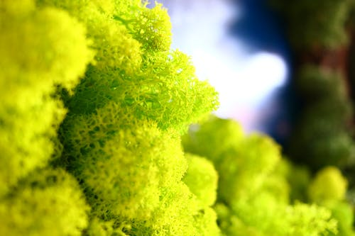Imagine de stoc gratuită din mușchi verde, ren, reni