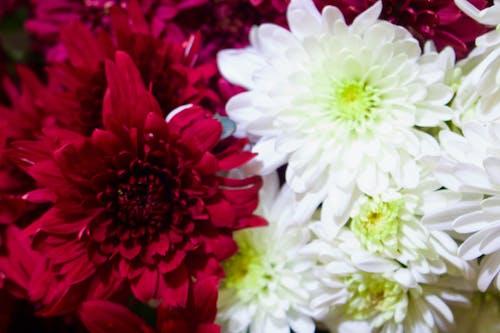 Fotos de stock gratuitas de hermosa flor
