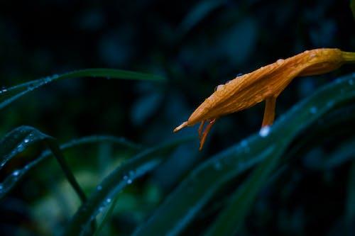 Fotos de stock gratuitas de flor en lluvia