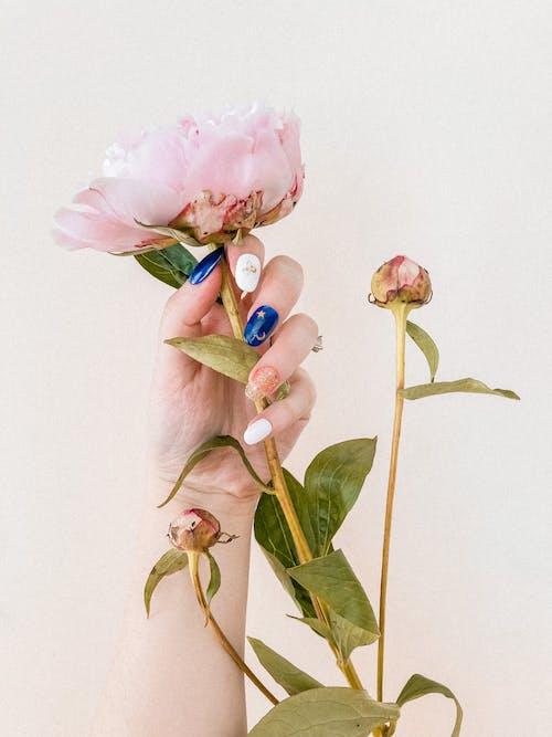 Fotobanka sbezplatnými fotkami na tému farba, flóra, jemný