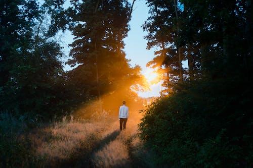 Fotos de stock gratuitas de aislado, al aire libre, amanecer