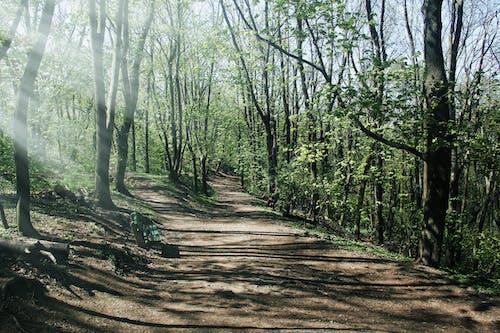 คลังภาพถ่ายฟรี ของ คำแนะนำ, คู่มือ, ต้นไม้