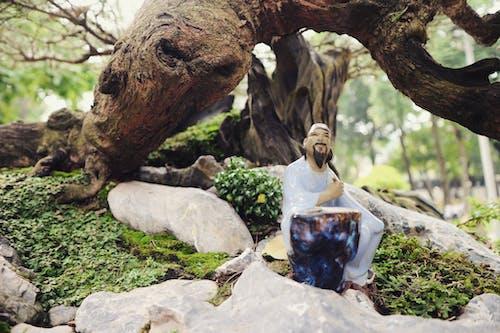 Immagine gratuita di giardino, parco, pietre, radici