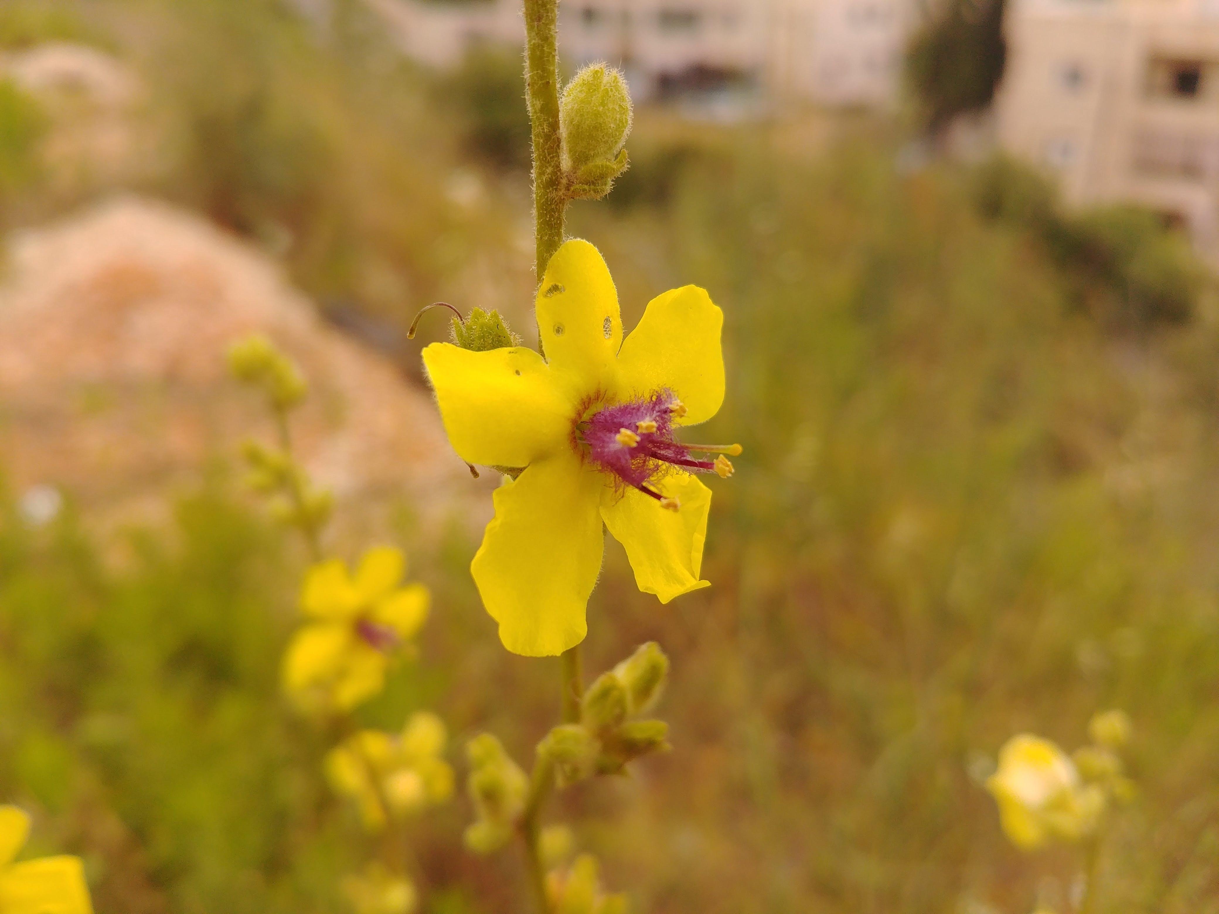 Free stock photo of flower, green, lg, mobilechallenge