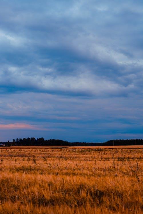 Gratis lagerfoto af bane, dagslys, dagtimer, gård
