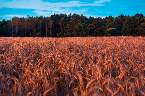 Gratis lagerfoto af afgrøde, agerjord, bane, gård