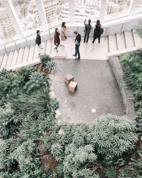Gratis arkivbilde med grønt, hage, innendørs, london