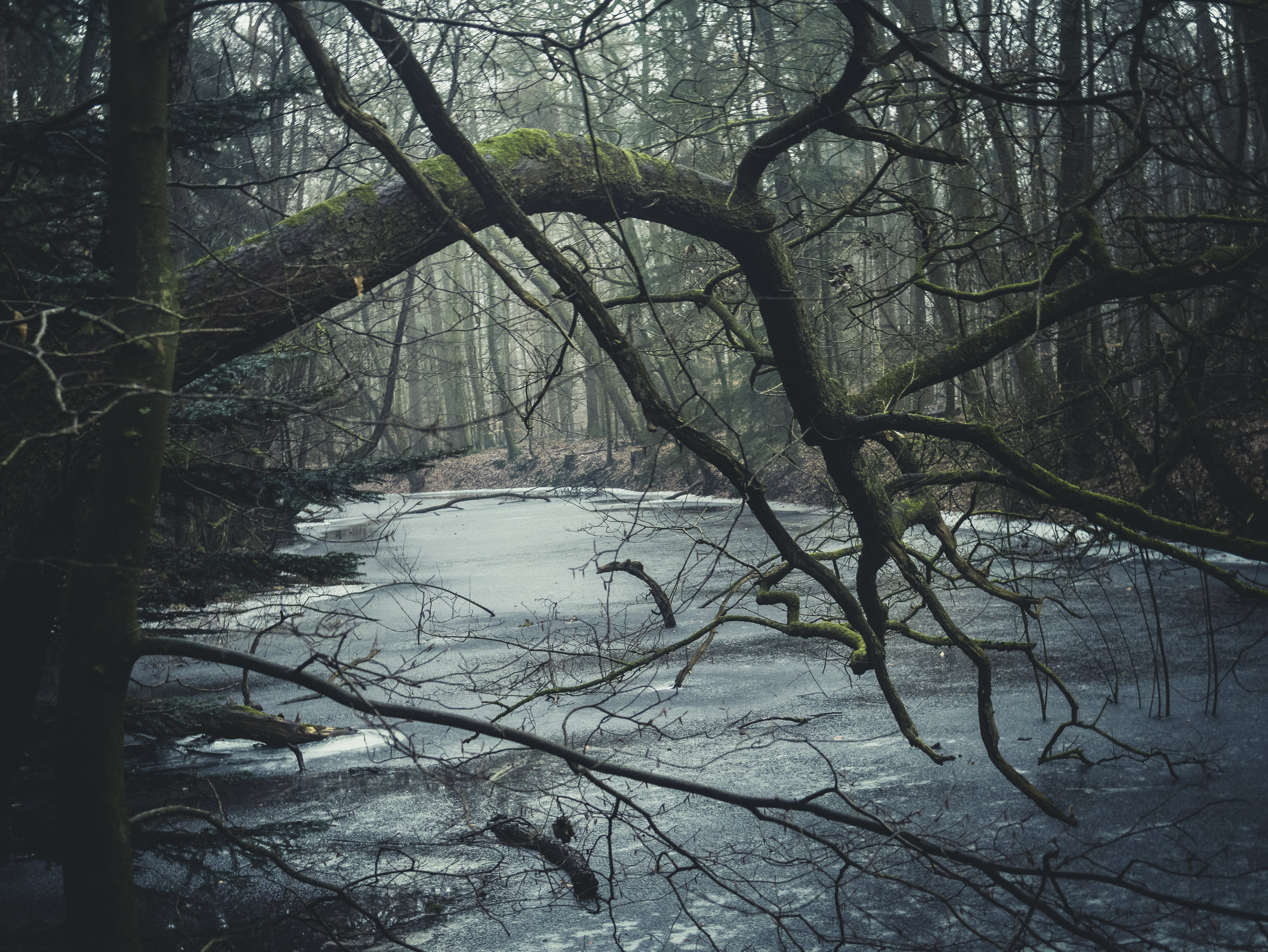 Free stock photo of natur, blau, wald, Landschaft