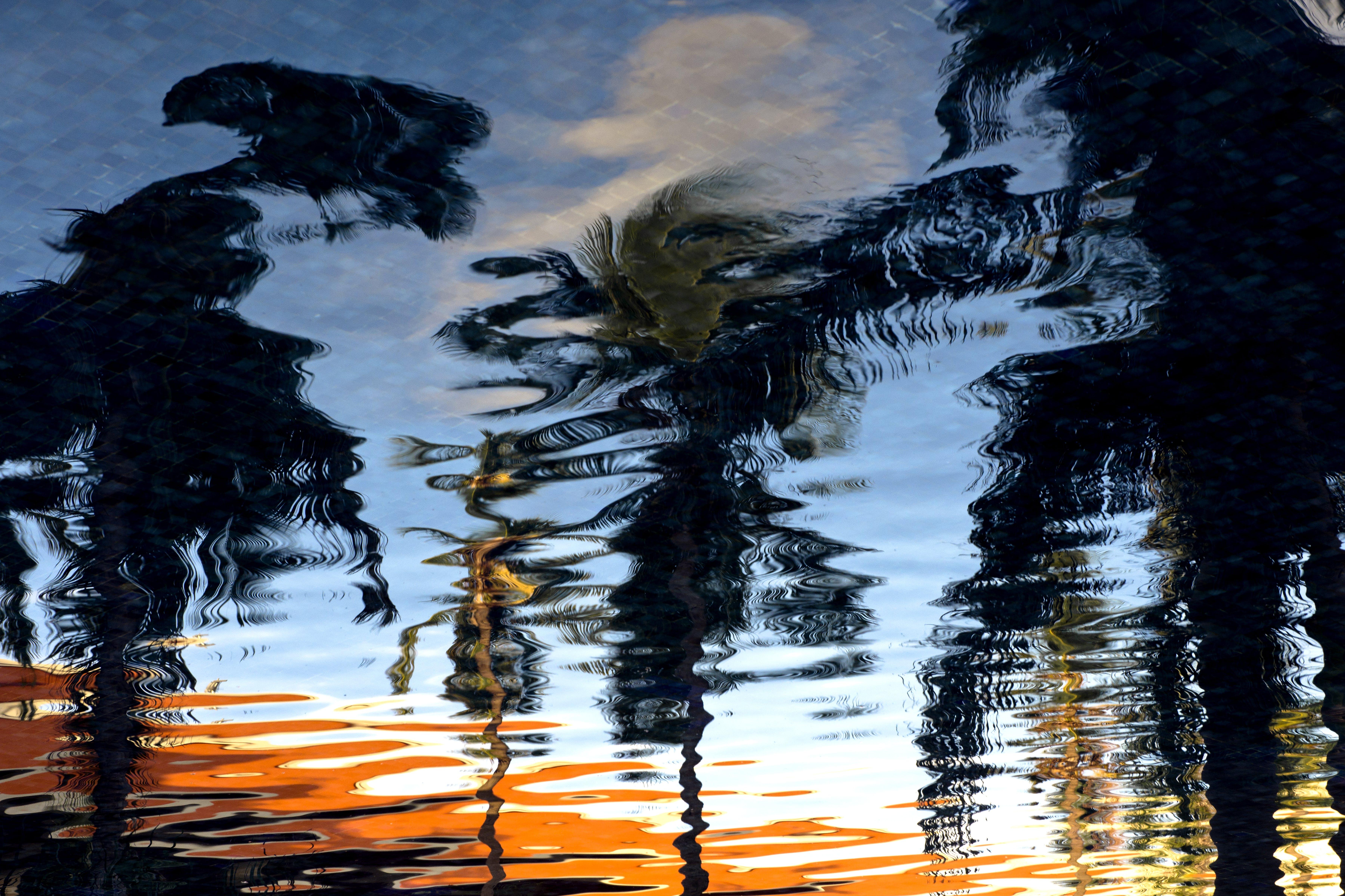 Kostenloses Stock Foto zu bäume, palmen, reflektierung, wasser