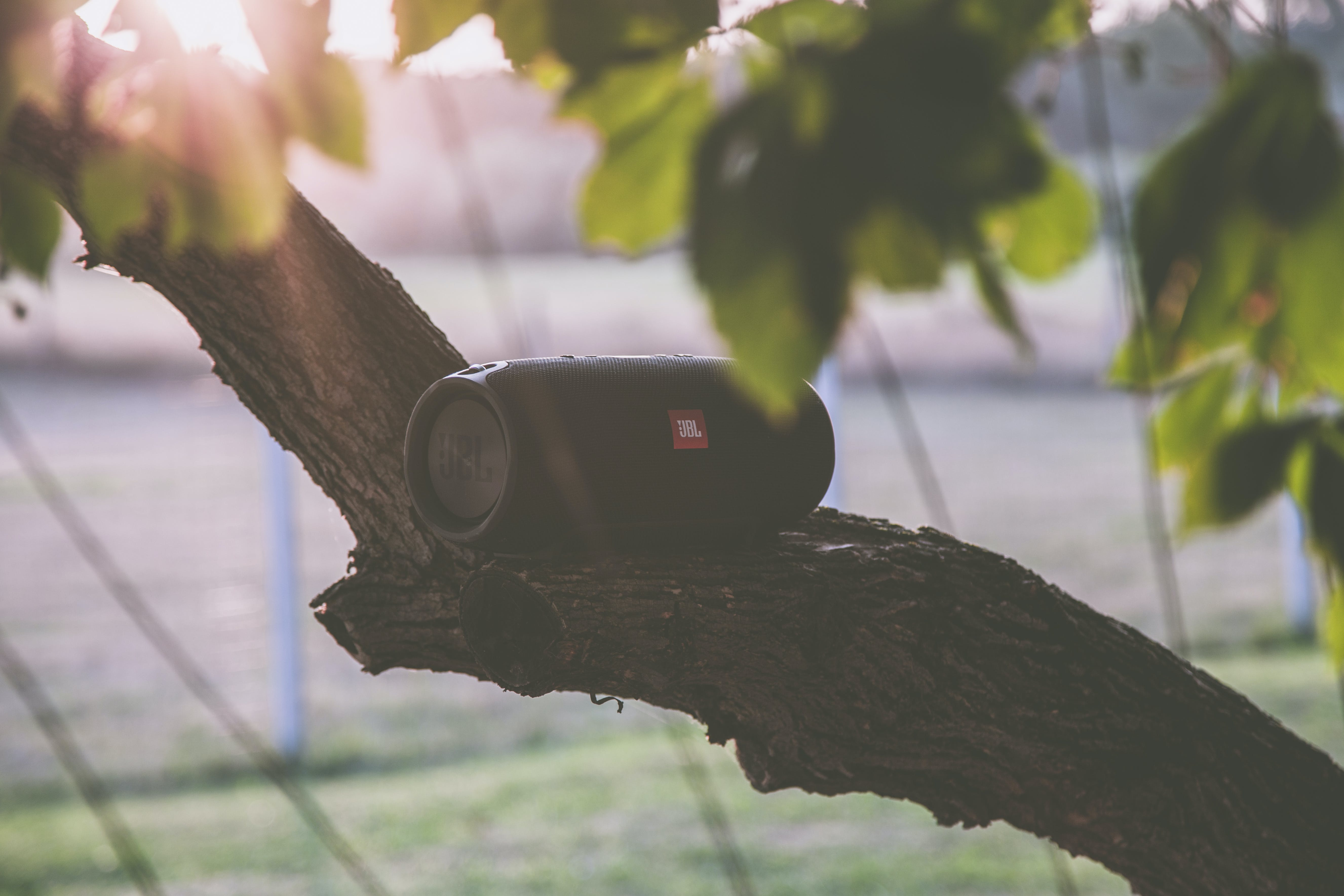 Black Jbl Bluetooth Speaker on Tree Branch