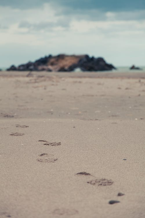 Foto profissional grátis de areia, arenoso, beira-mar, cheio de areia