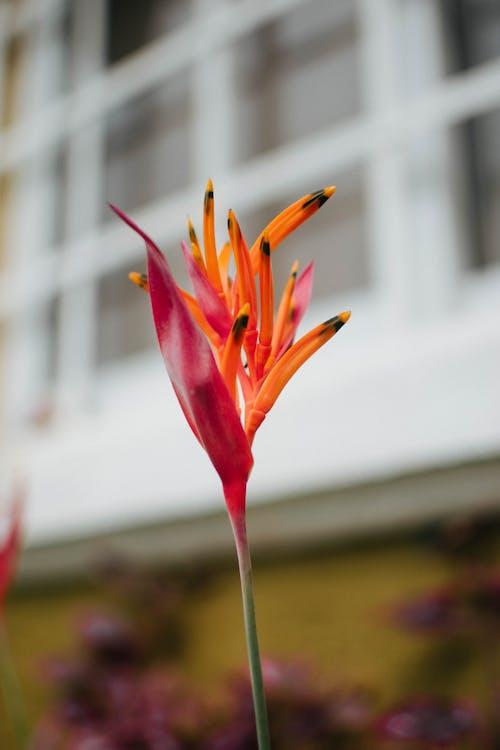 Foto profissional grátis de exterior, flor, janela