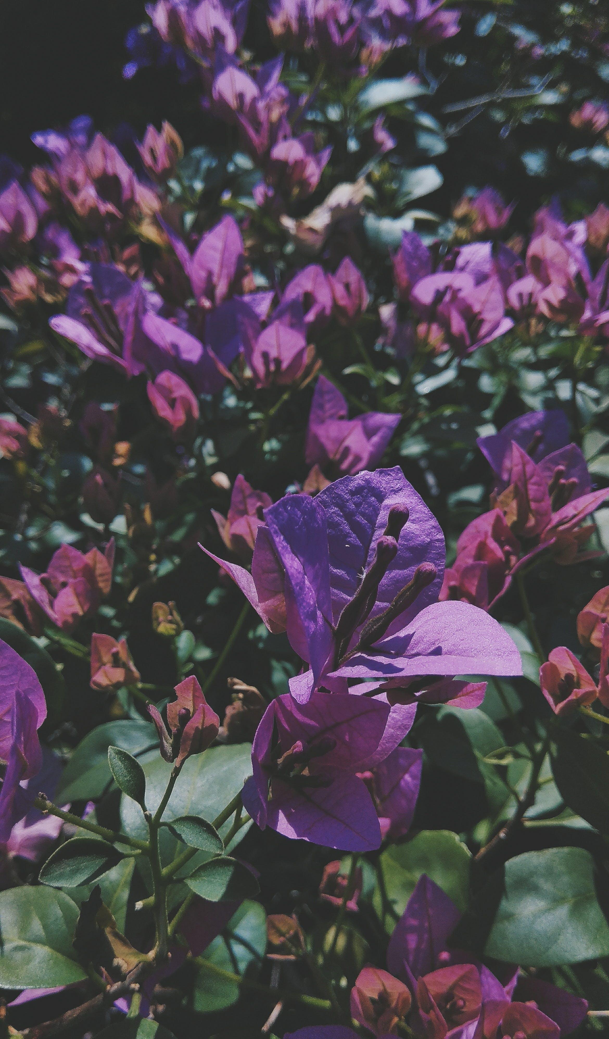 Free stock photo of nature, garden, india, fresh