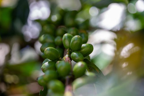 Free stock photo of agriculture, arabica, asia