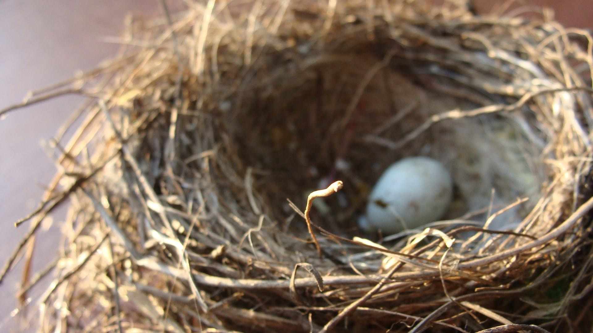 White Egg on Nest