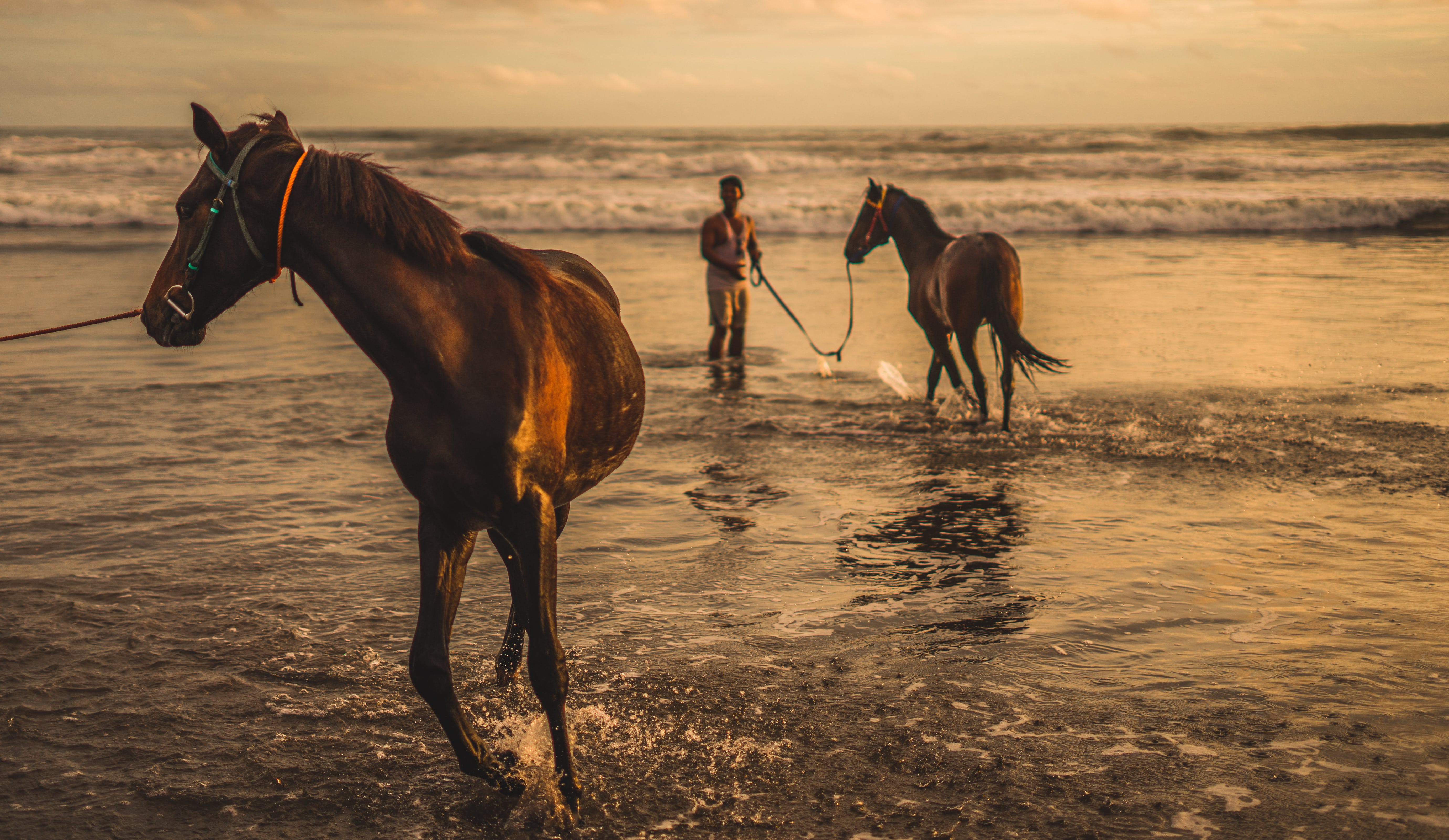Two Brown Horse on Sea