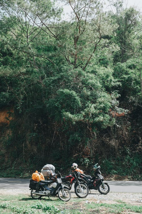 People Riding Motorcycle on Forest