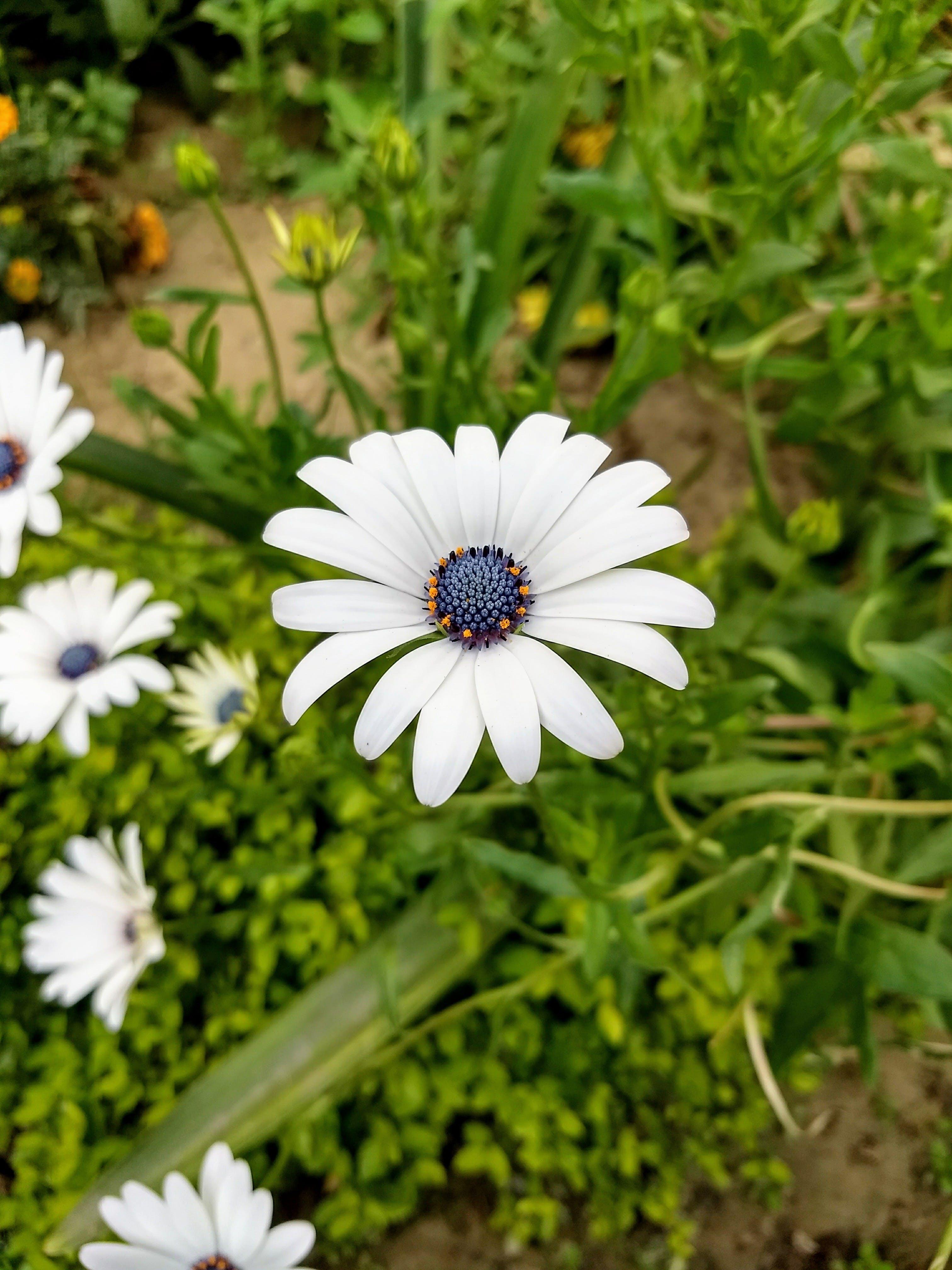 Bahçe, beyaz, bitkibilim, bitkiler içeren Ücretsiz stok fotoğraf
