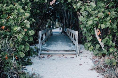 คลังภาพถ่ายฟรี ของ ก้าน, การเจริญเติบโต, ต้นไม้, ทราย