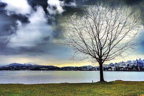 Darmowe zdjęcie z galerii z chmury, cichy, drzewo, dzień