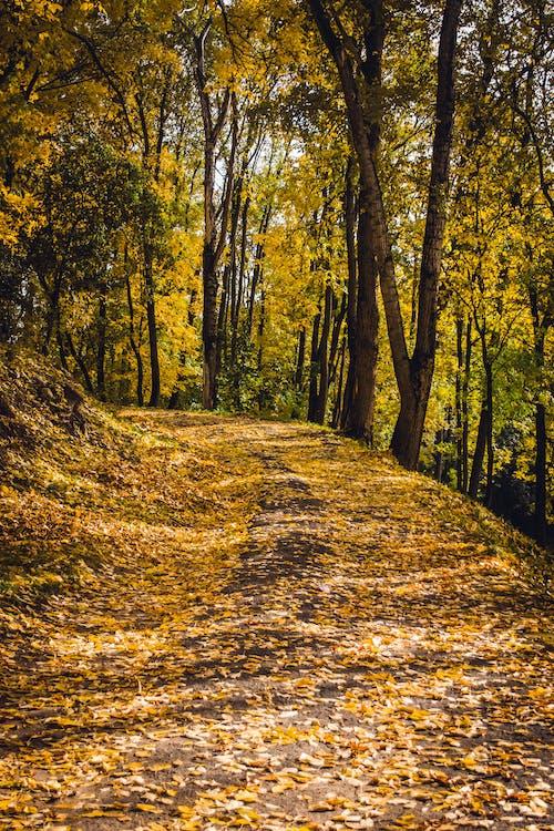 公園, 原本, 場景, 大自然 的 免费素材照片