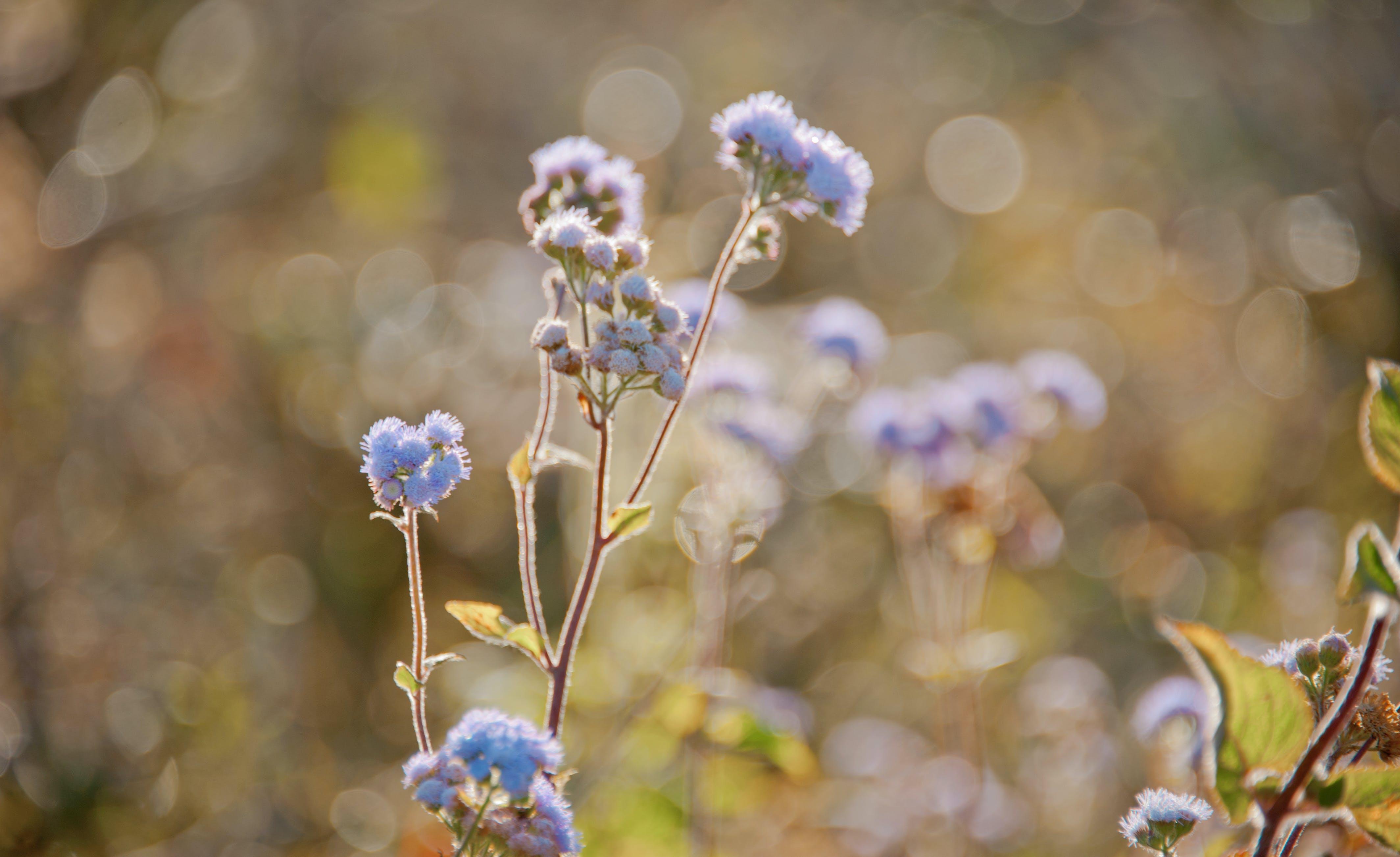 Tilt Lens Photography of Purple Flower