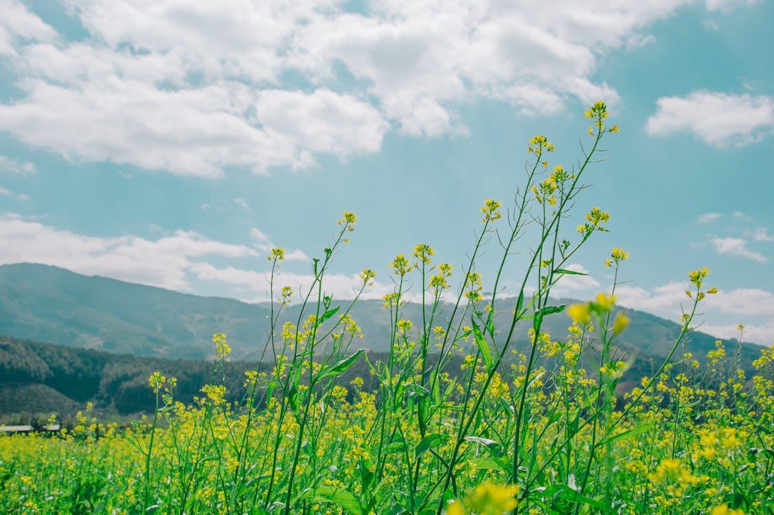 kasvikunta, kasvu, kenttä