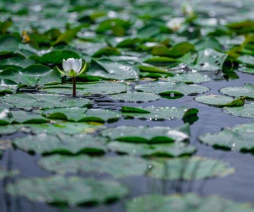 Foto d'estoc gratuïta de aigua, aquàtic, bonic