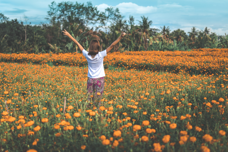 Gratis arkivbilde med åker, blomster, blomstre, dagslys