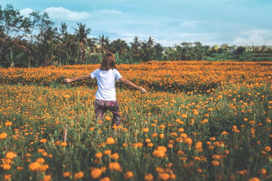 åkermark, anläggning, blomma