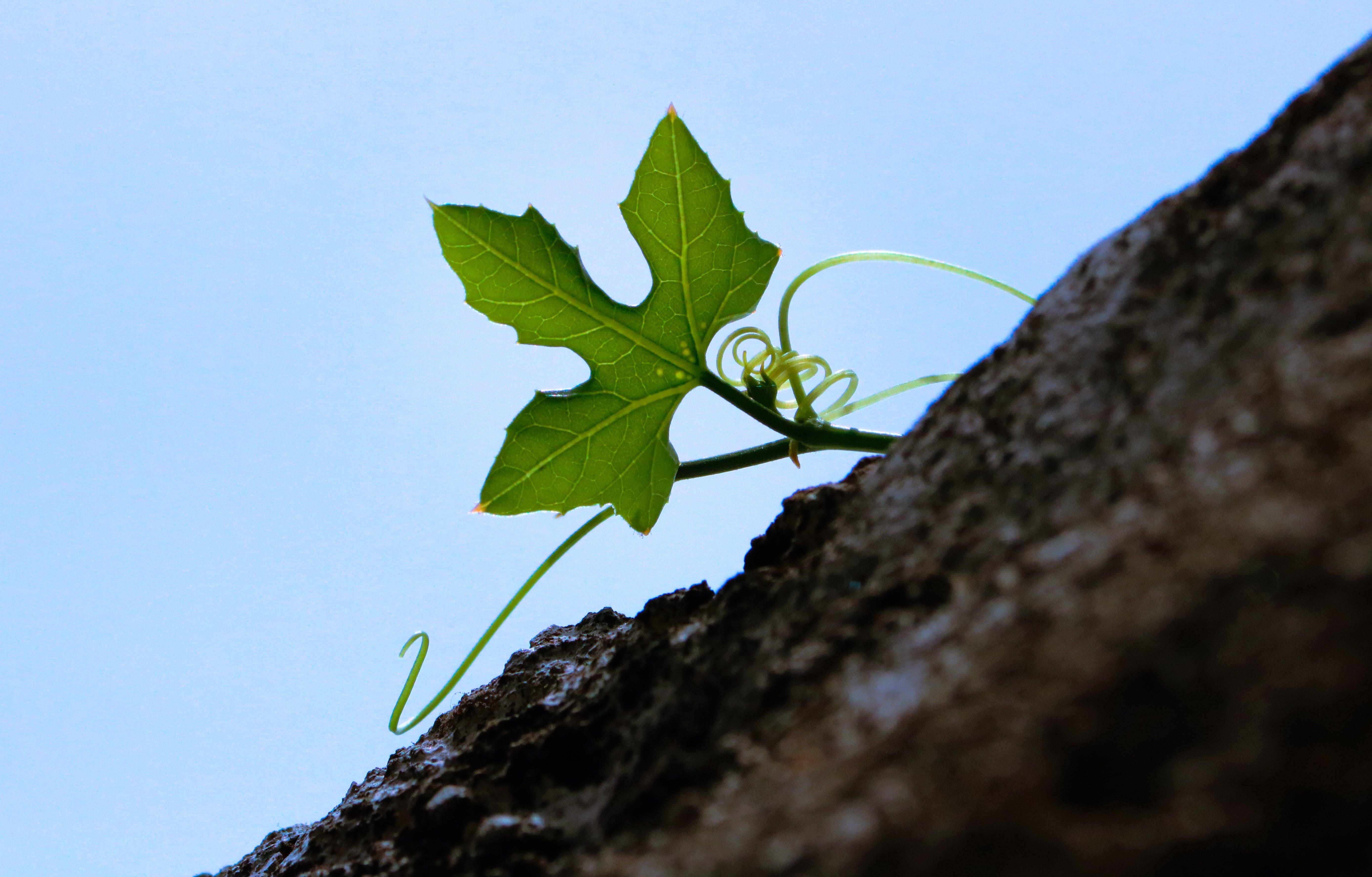 Green Leaf Plant Under Blue Sky at Daytime