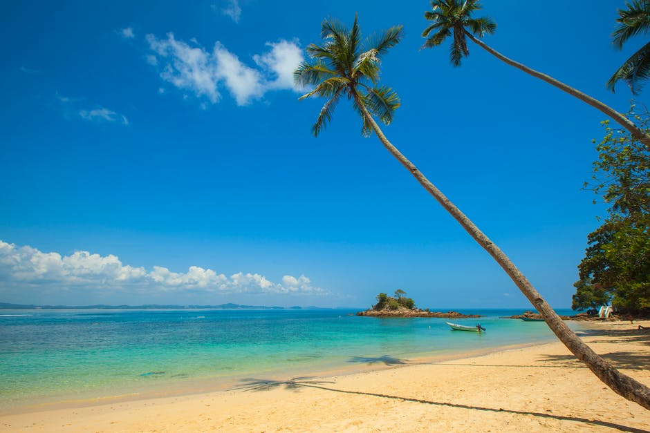 Green Coconut Palm Beside Seashore Under Blue Calm Sky during Daytime