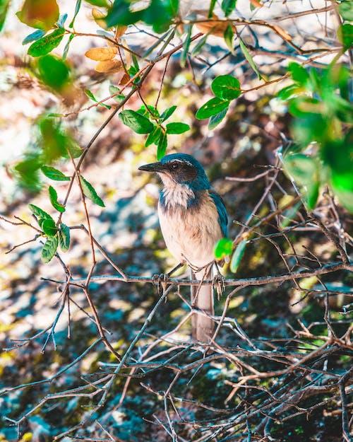 Ảnh lưu trữ miễn phí về canh, cây, chim