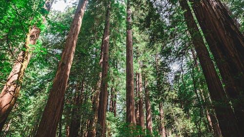 Ảnh lưu trữ miễn phí về bình minh, cây, cây lá kim