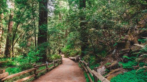 Ảnh lưu trữ miễn phí về cây, công viên, danh lam thắng cảnh