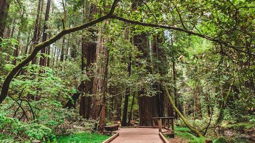 Ảnh lưu trữ miễn phí về cây, công viên, dã man