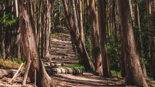 Ảnh lưu trữ miễn phí về bình minh, cây, công viên