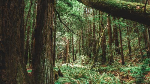 Ảnh lưu trữ miễn phí về cây, cây bách, cây lá kim