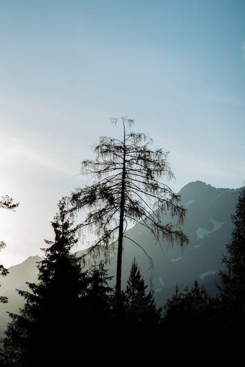 Kostenloses Stock Foto zu alpen, ausflug, berge