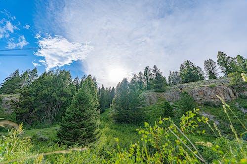 Бесплатное стоковое фото с lakeshore, белые облака, берег озера
