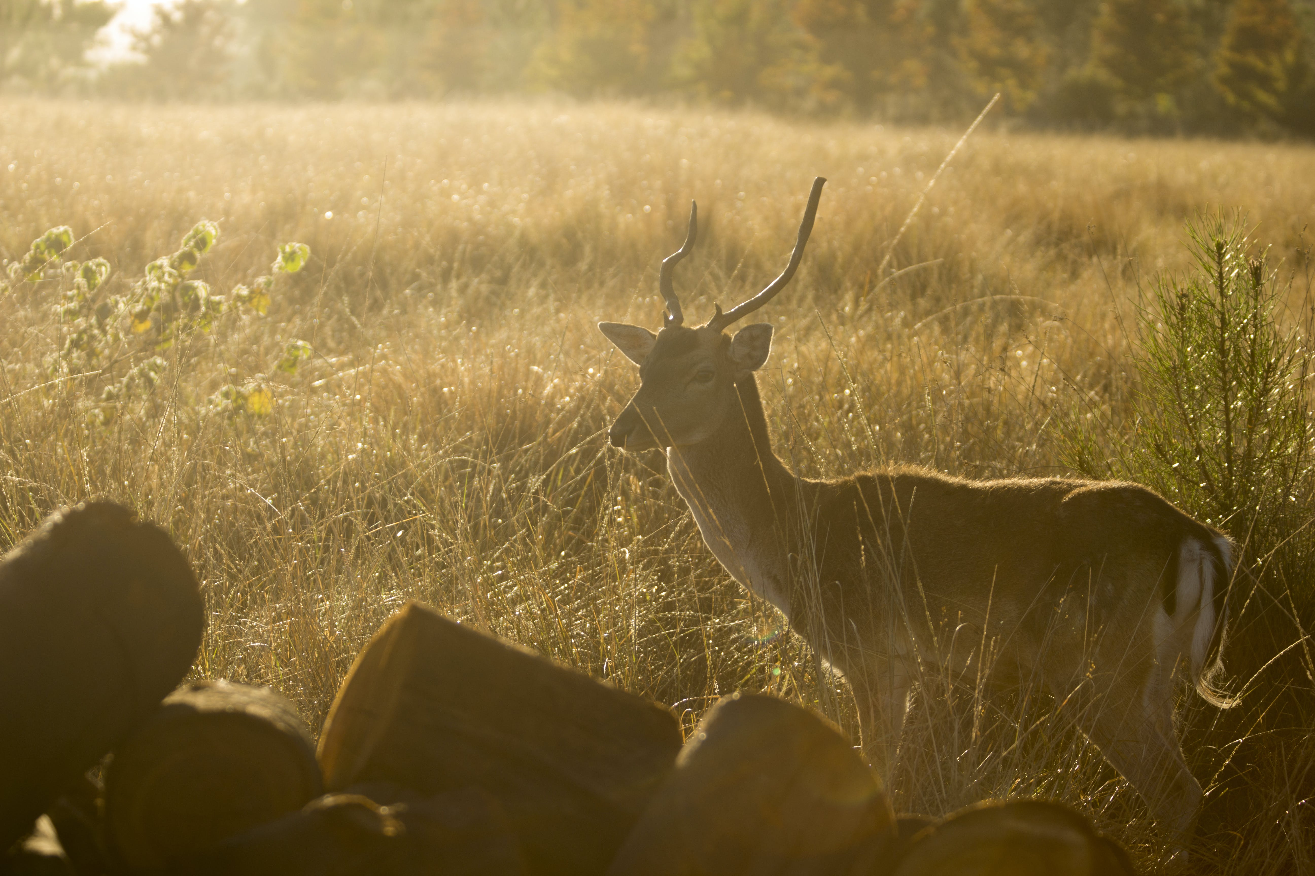 Brown Deer Surrounded by Grass during Sunset