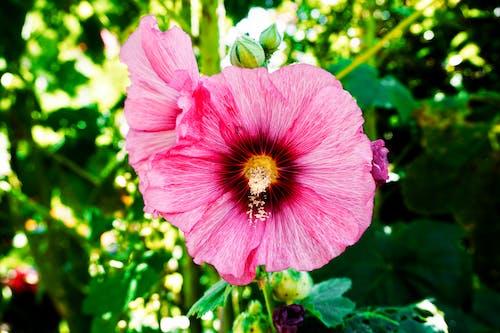 Gratis stockfoto met blad, bloeien, bloeiend