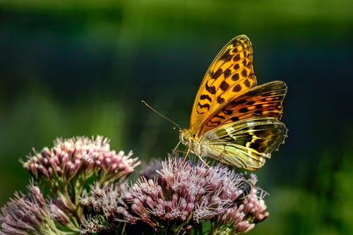 Close-Up Shot of a Butterfly on a Purple Flower