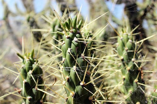 Gratis stockfoto met cactus, natuur, woestijn