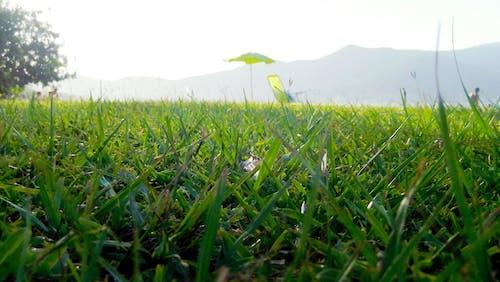 Gratis stockfoto met gras, zomer